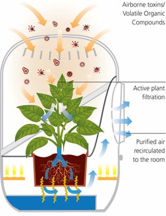 Natural Plant Air Filter