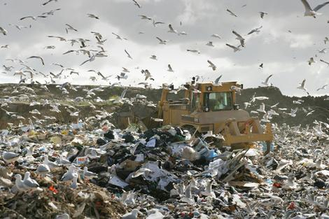 plastic bags in landfill