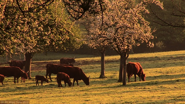 livestock and orchards