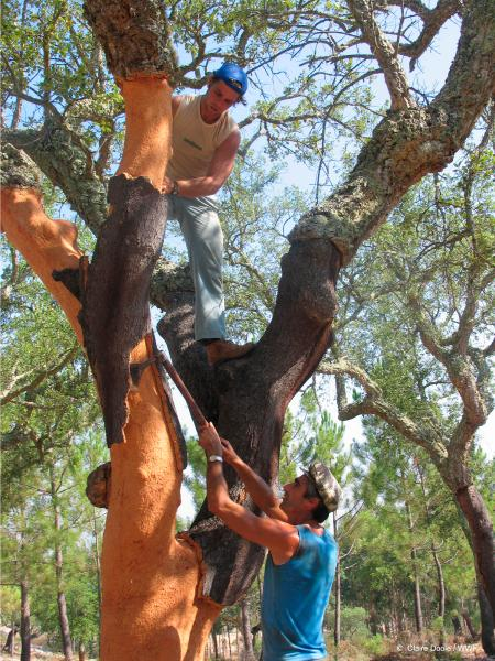 sustainable cork harvesting