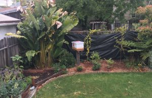Backyard Bee Hives