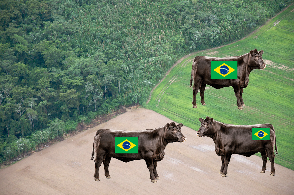 Beef Grazing Amazon Deforestation