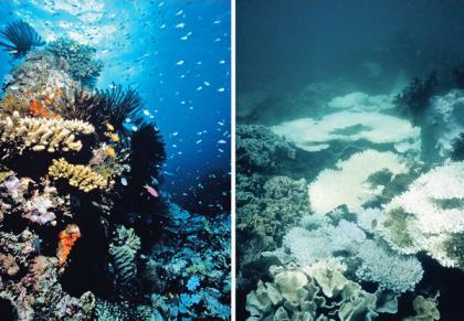 sunscreen coral bleaching