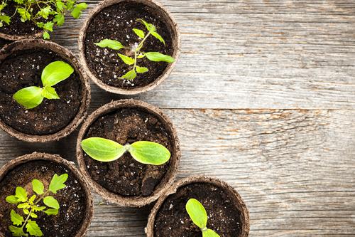 Plants providing solar energy